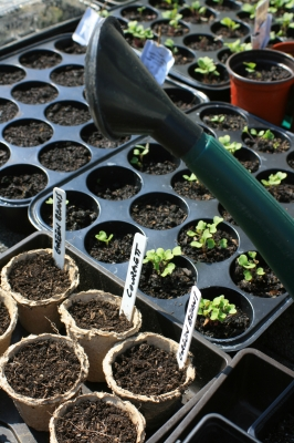 Seedlings And Pots