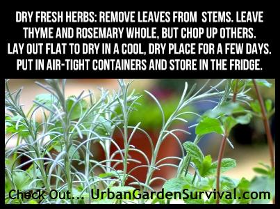 Using & Storing Fresh Herbs